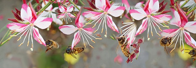 Bees with pink flowers